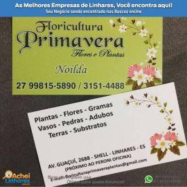 Floricultura Primavera Flores e Plantas